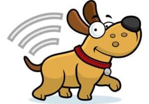 Dog-with-microchip